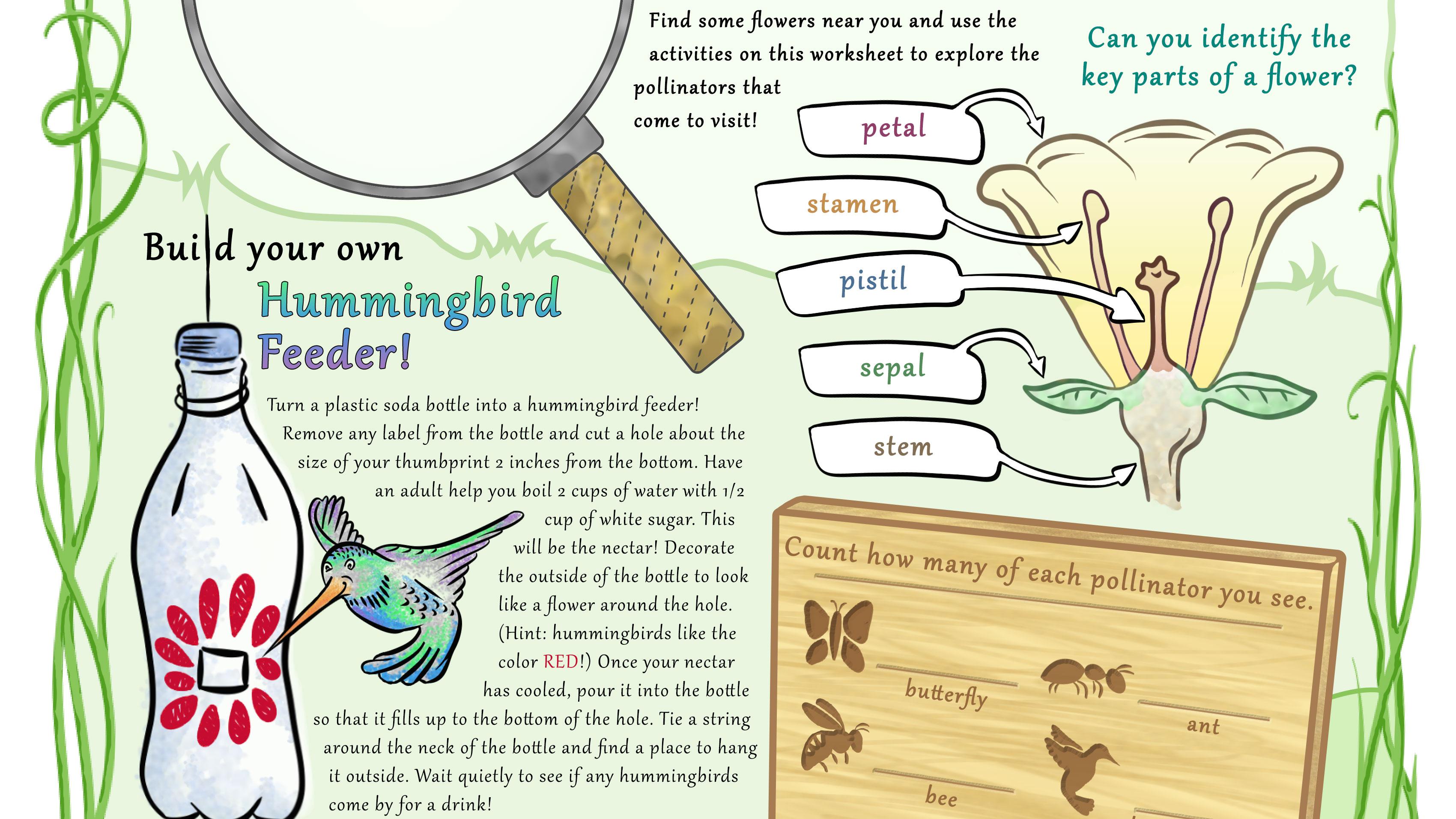Pollinator Backyard Activity Guide – Pollination Worksheet