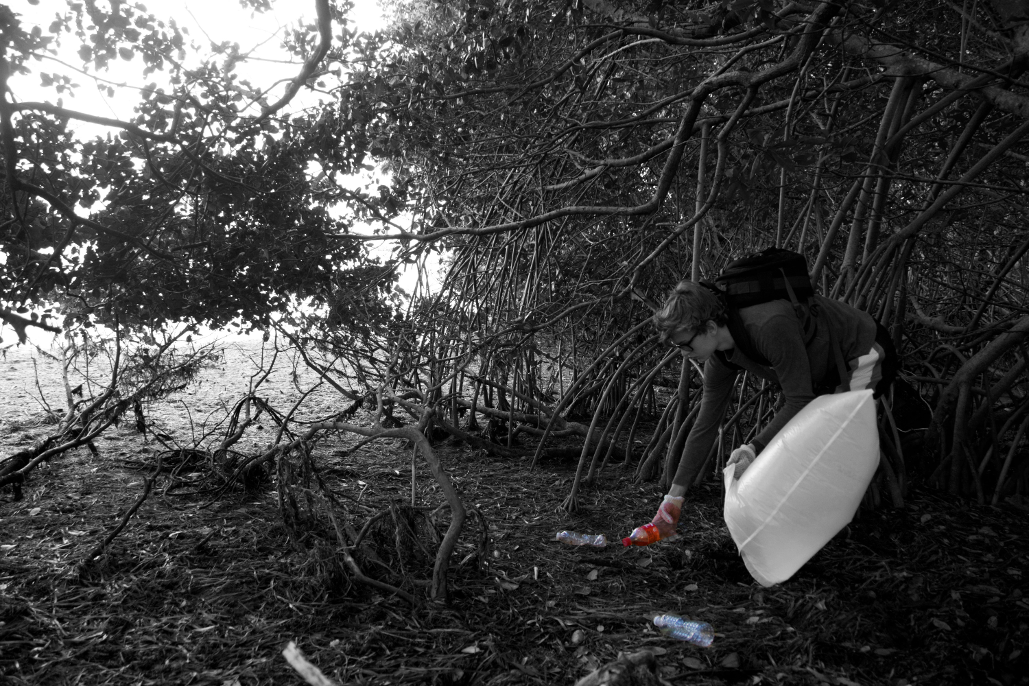 Litter cleanup around mangroves