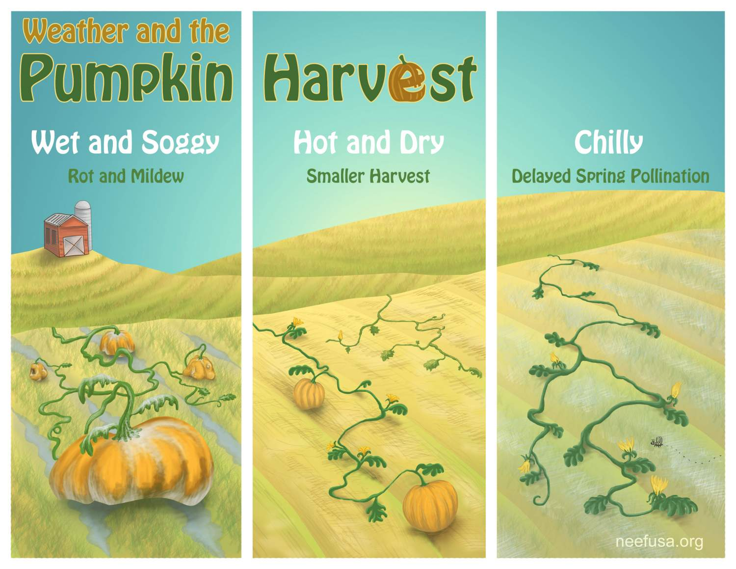 Weather and the Pumpkin Harvest