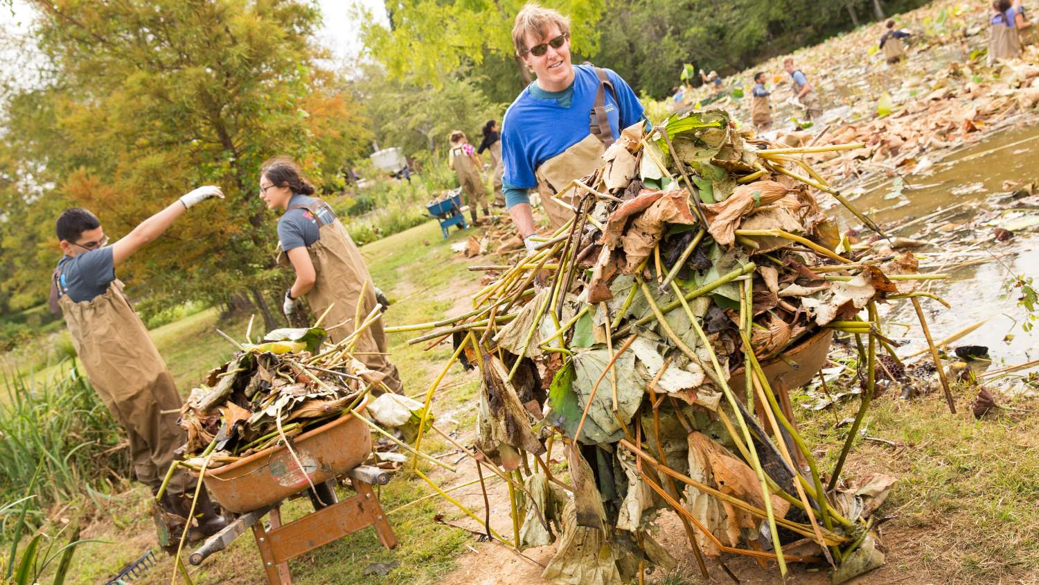 Kenilworth volunteers carting debris from the ponds