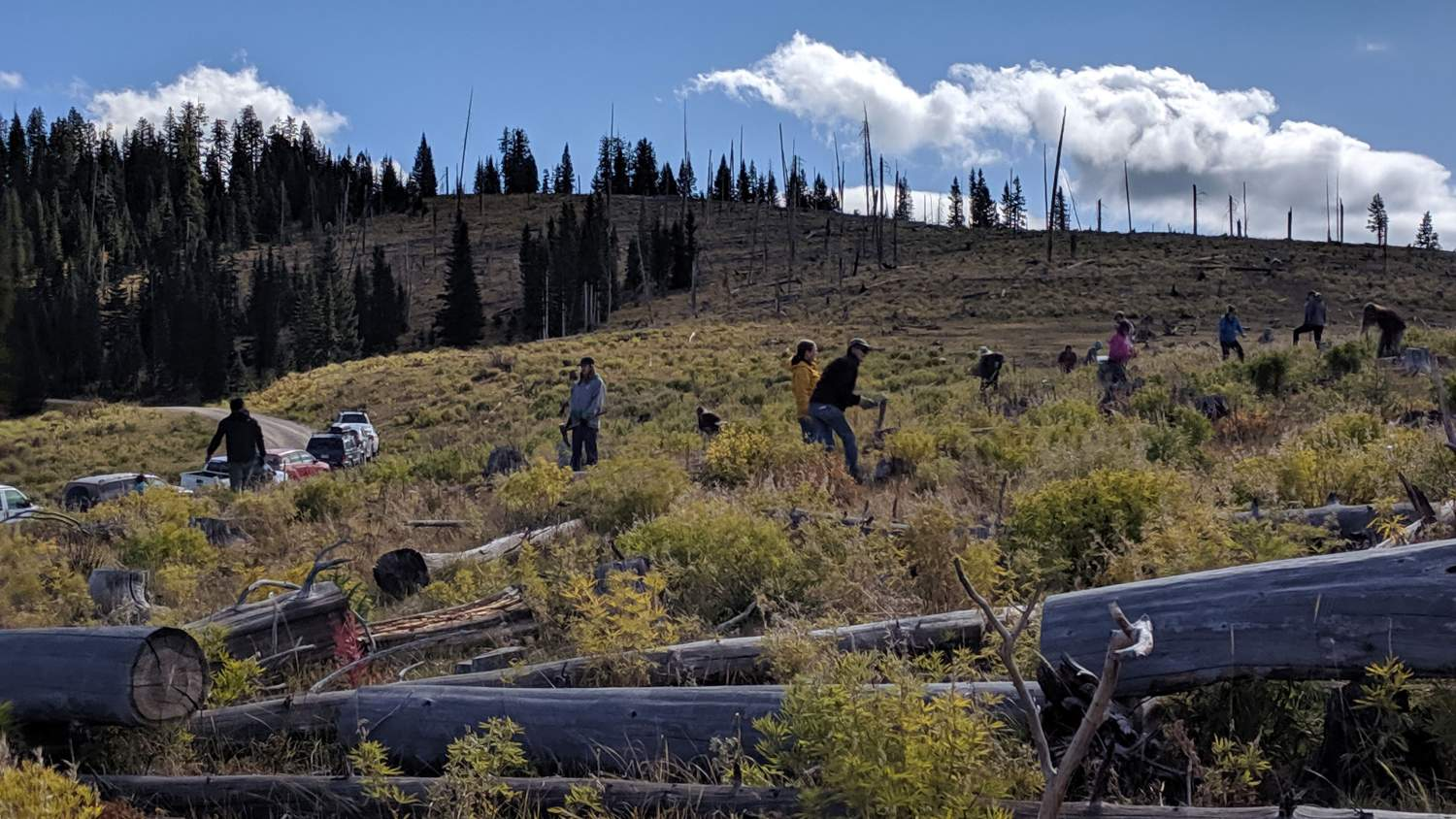 Volunteers clearing brush