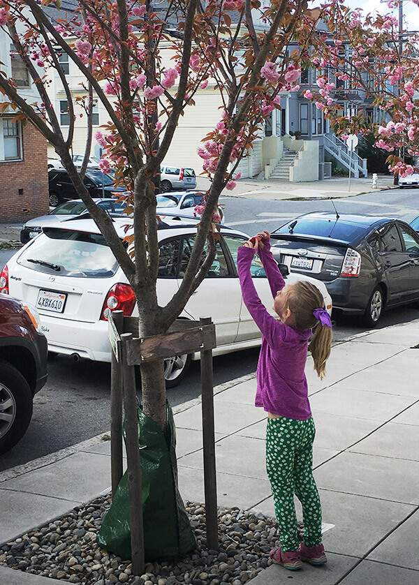 Young girl taking picture of tree with flowers