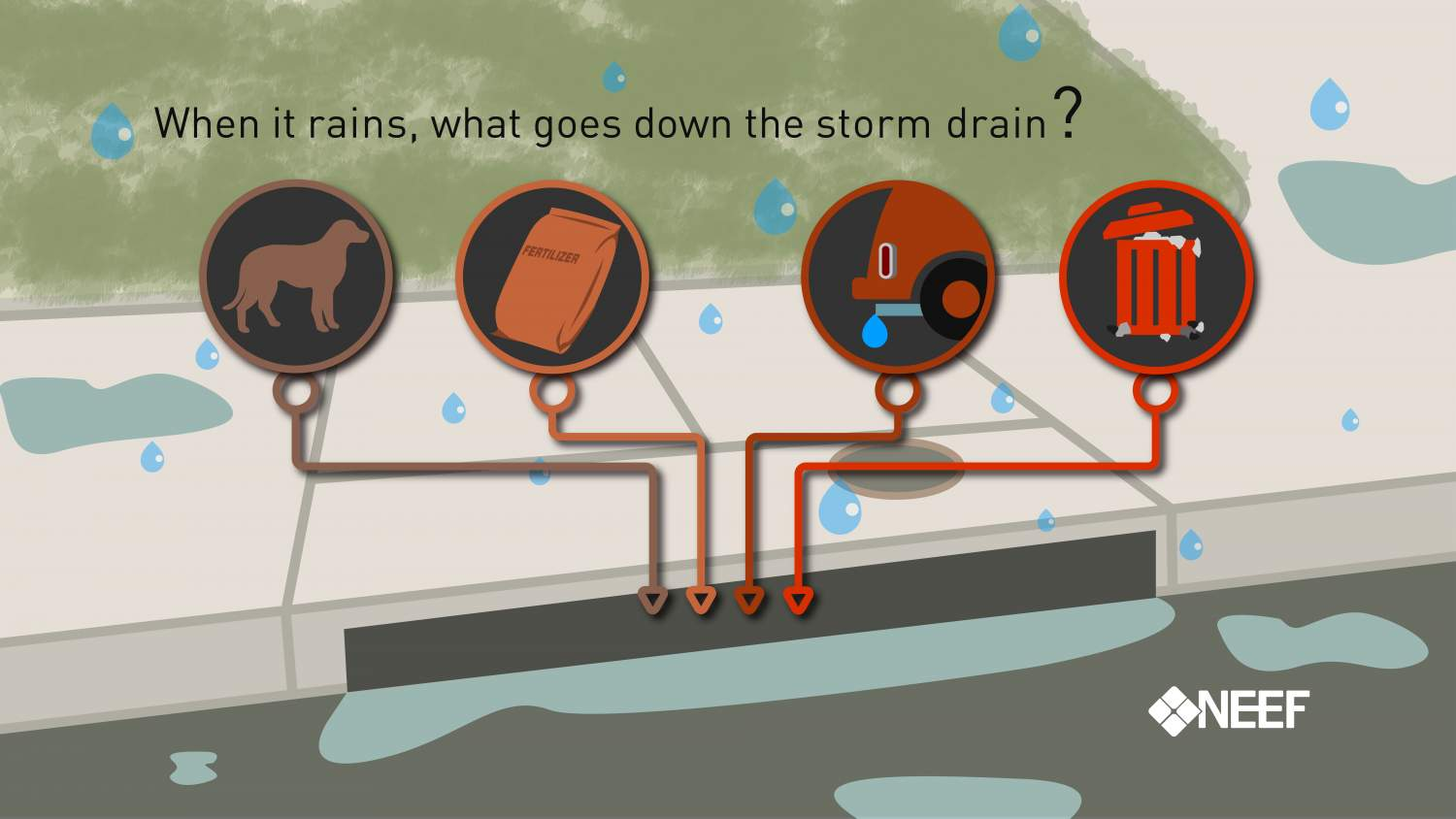 When it rains, what goes down the storm drain?