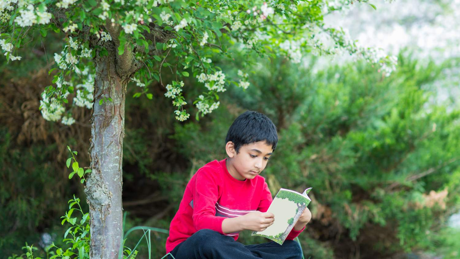 Kid reading by tree