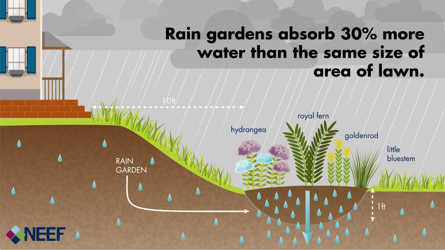 Rain gardens absorb 30% more water than the same size of area of lawn