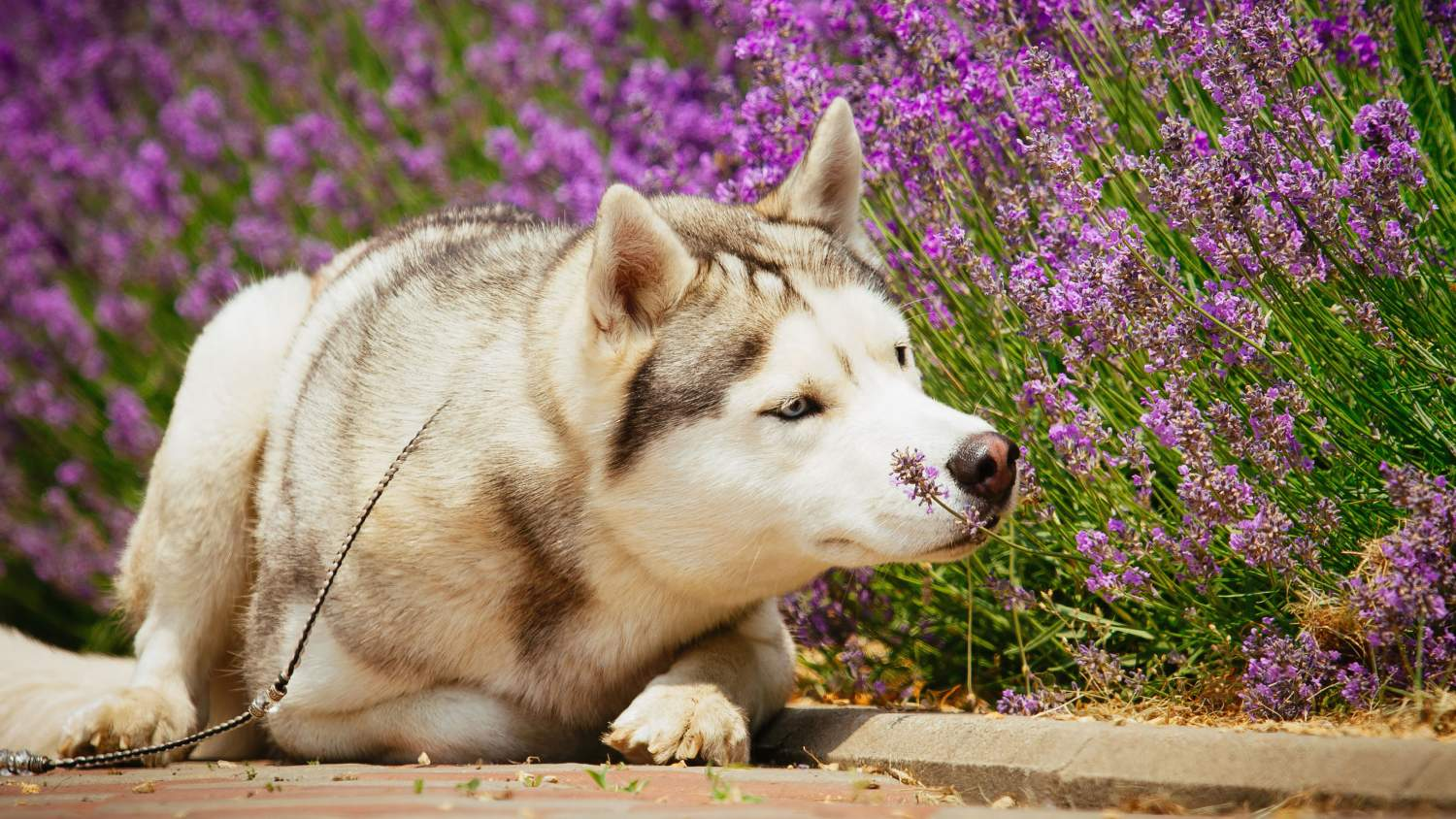 Dog sniffing the flowers