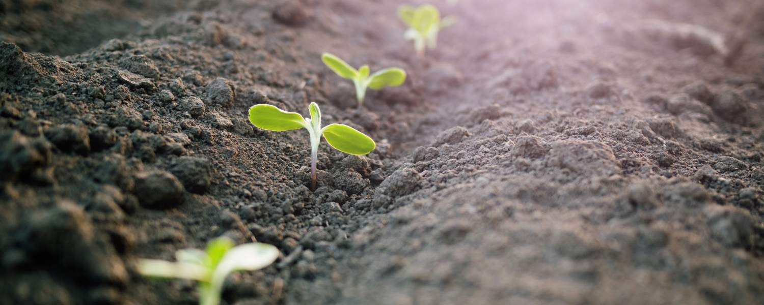 Spring gardening tips for sustainability