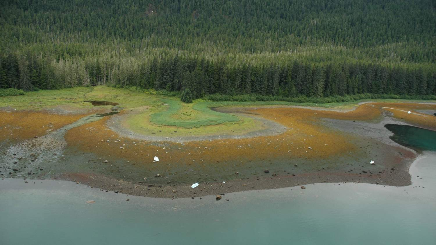 Aerial photograph. A kaleidoscopic shoreline with bands of red and orange algae in the low tide zone, blocks of ice on the shore, and varying shades of green in the terrestrial flora. Alaska, Sitka Sound.