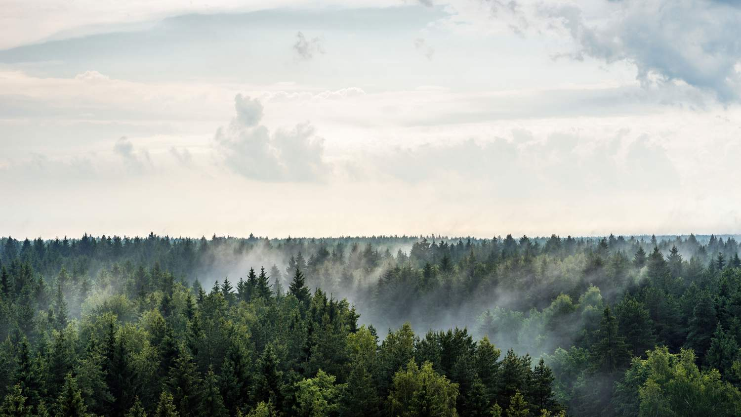 Evaporation in a forest