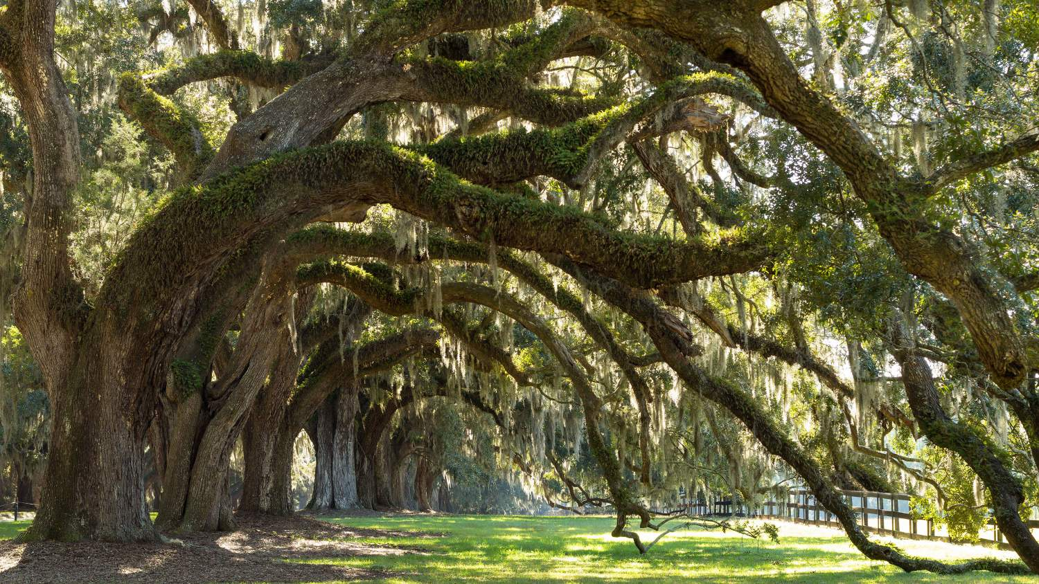 Southern gothic trees