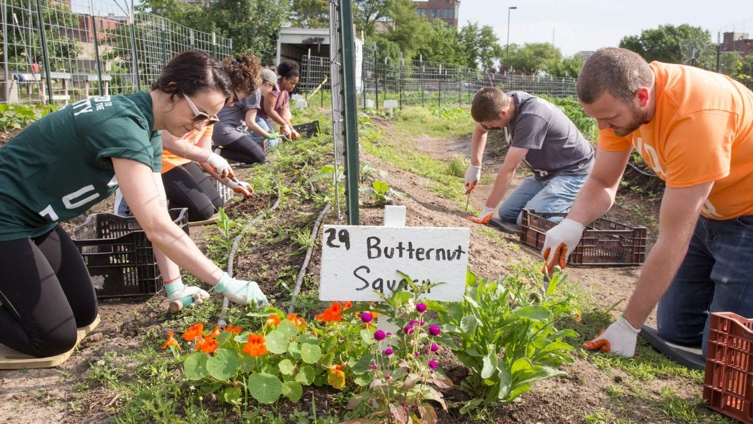 Volunteers planting at a community garden