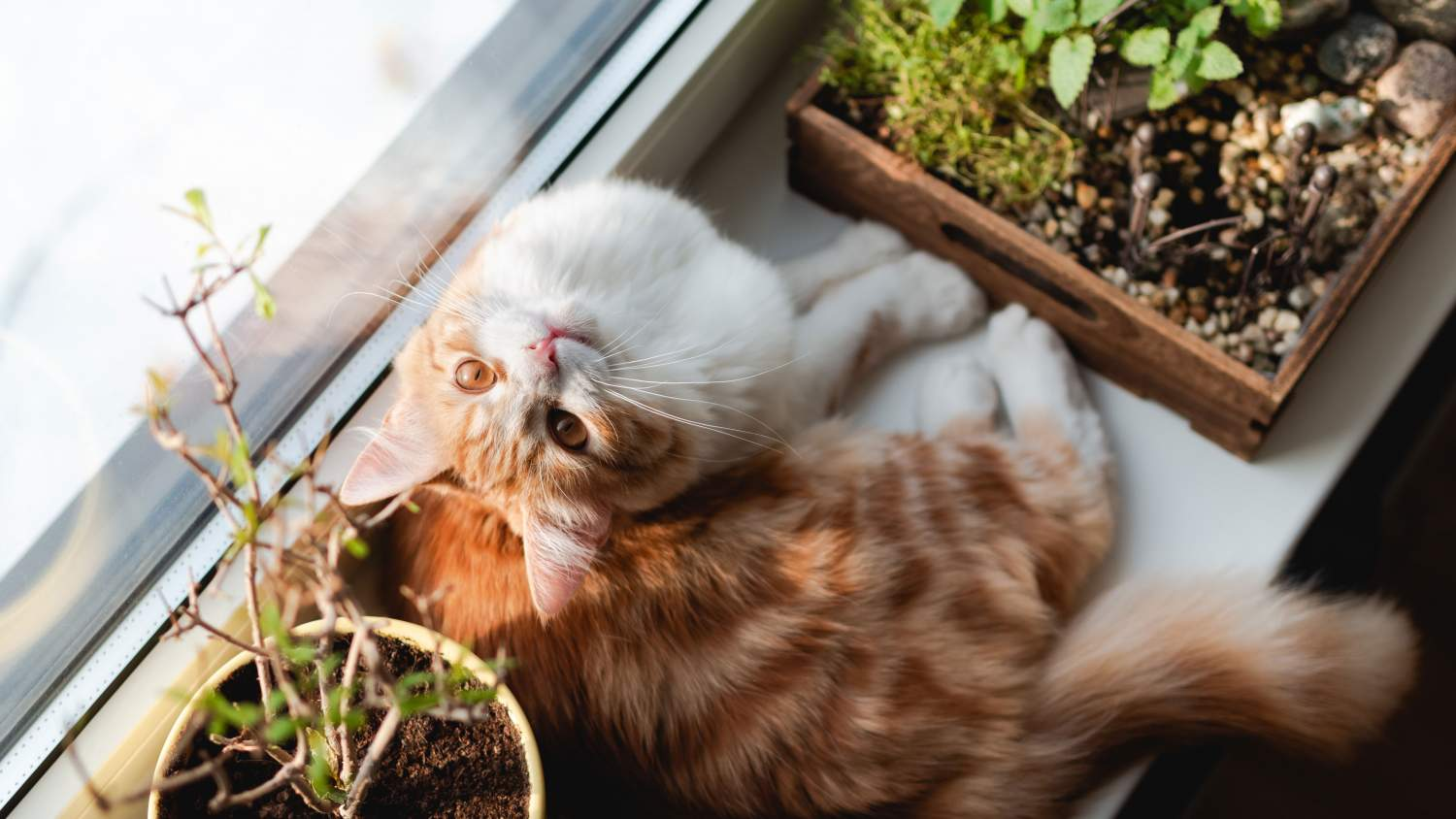Cat on a windowsill with house plants