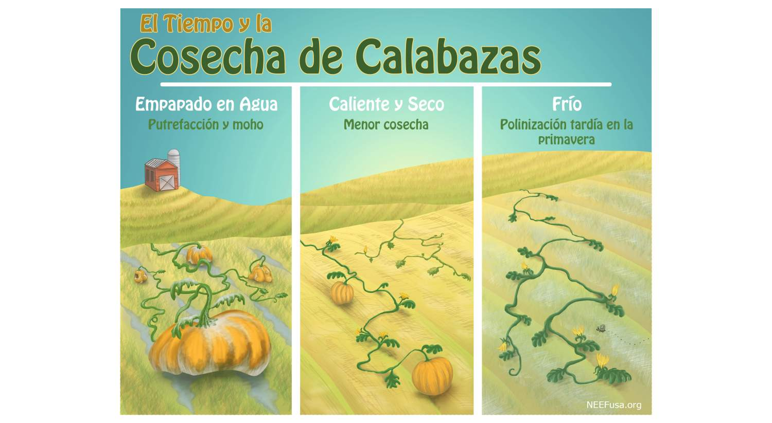 Weather and Pumpkin Harvest Spanish