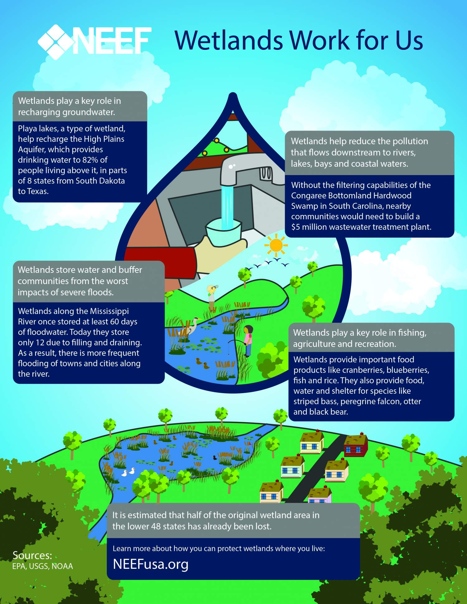 Infographic demonstrating the ecosystem services of wetlands