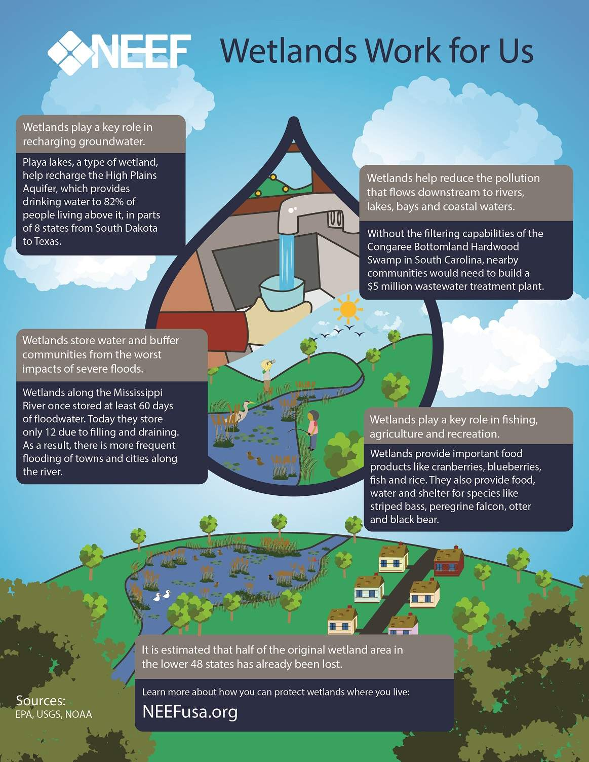 Wetlands Work for Us & Lesson 1: Watershed Basics | NEEF