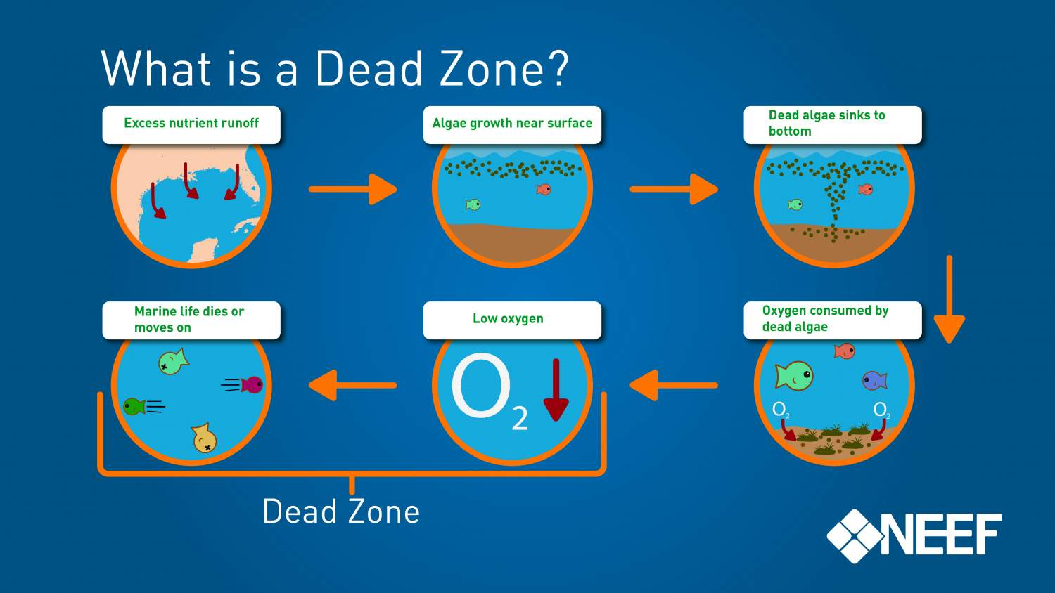 What is a Dead Zone?