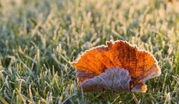 Leaf on frosted ground
