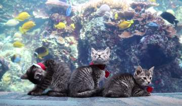 Kittens at the aquarium