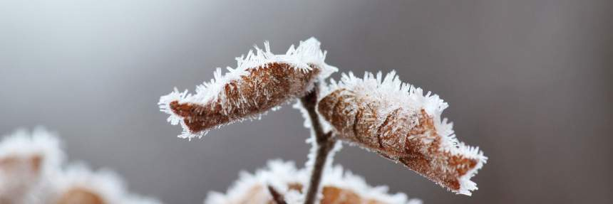 Hoarfrost on fall leaves