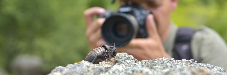 Man taking picture of a cockroach