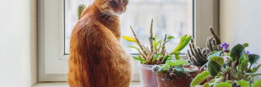 Ginger cat on a windowsill