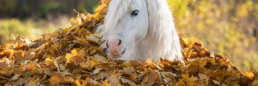 Pony hiding in autumn leaves