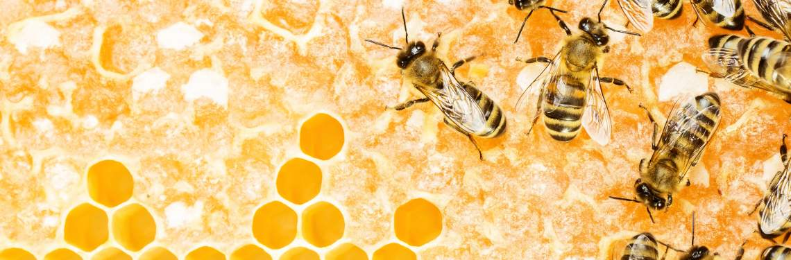 Swarm of bees on a honeycomb