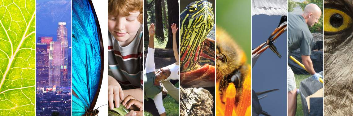 Chapter covers of the Environmental Literacy Report 2015