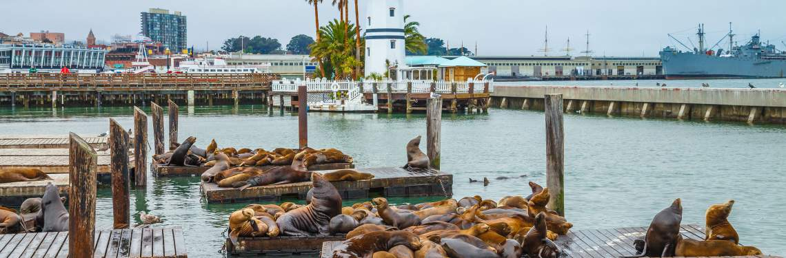 Seals at Pier 39 in San Francisco
