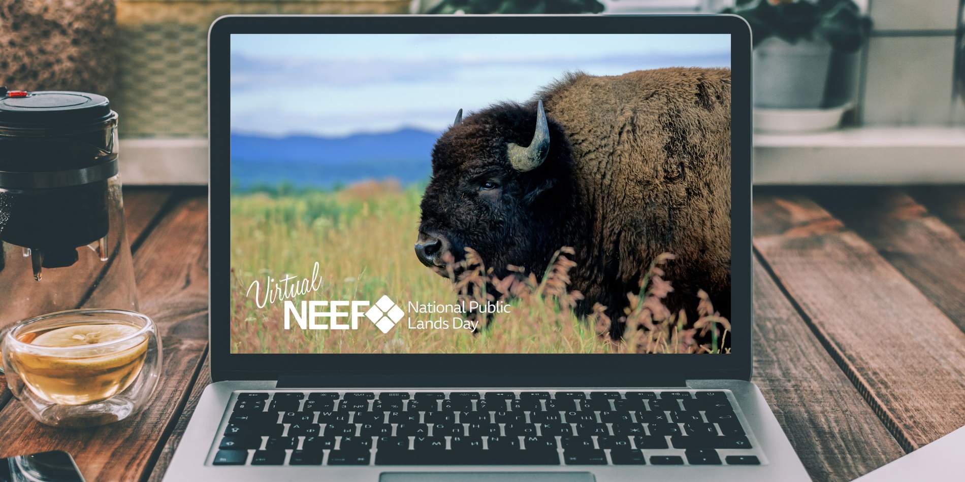 Laptop on table; Copyright: RayBond (https://stock.adobe.com/images/laptop-on-table/153503397) and Martha Marks (https://stock.adobe.com/images/iconic-american-bison-in-grand-teton-national-park-in-wyoming/85213115)