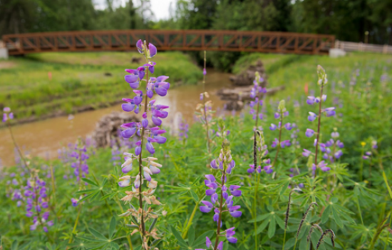Flower near river and bridge from NEEF grantee project